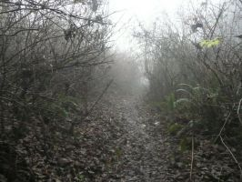 Misty Path by Track-Maidens