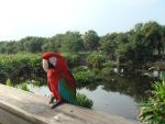 Parrot in da Swamp by Designdivala