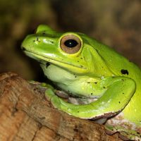 Tree Frog  3 by s-kmp