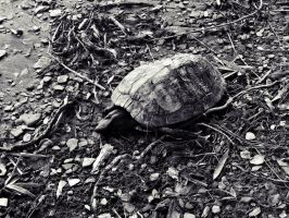 Lifeless Shell by JeremyC-Photography