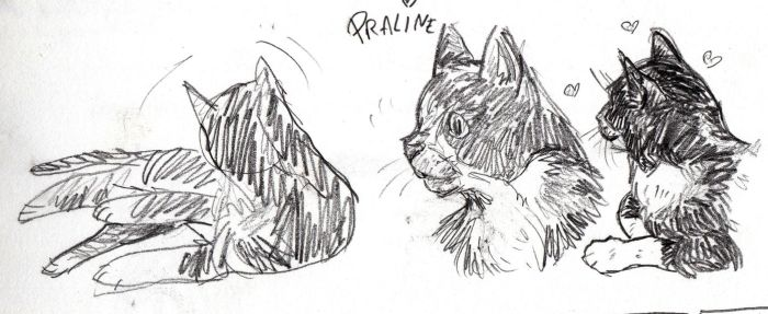 Sketches of my cat by AlixPaugam
