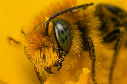 Miner Bee at 2x_II by dalantech