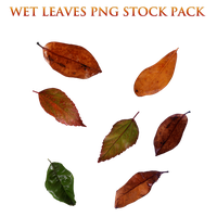 Wet Leaves Png Stock Pack by KarahRobinson-Art