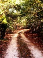The Road Less Traveled by Avelith