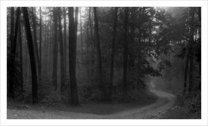 2 forest minutes by gndrfck
