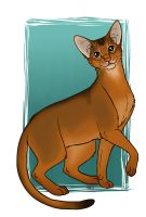 Abyssinian by Greykitty