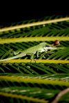 Green Lizard by TinyCueCard