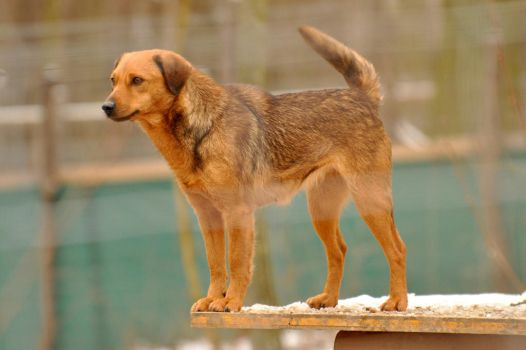 WSC dogs stock 5 by windfuchs
