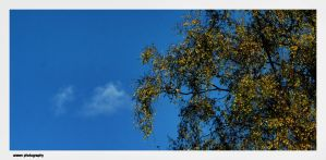 The Tree. The Cloud. The Autumn. by Arawn-Photography