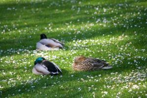 Canard 07 by Jules171