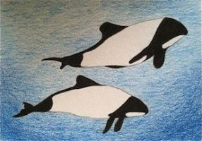 Commerson's Pair ACEO by whitetippedwaves