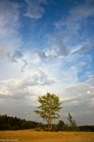 Lonely tree by Jamurka