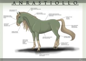 Knowing The Anrastiollo by Equinus
