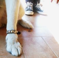 We rock_my dog by equiclubecastello