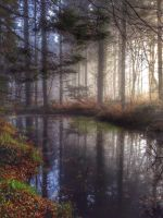 Enchanted forest by donnalouise28