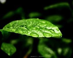 Water Droplets by mrvanhite