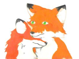 Foxes by Hane-to-Yume