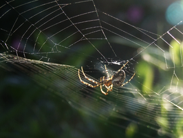 22. spider world by littleconfusion