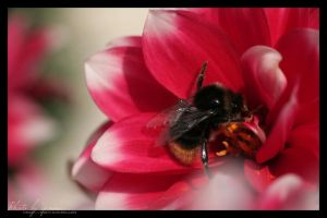Bumble bumble by yenna-photo
