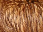Long Wet Dog Fur Texture 2 by FantasyStock