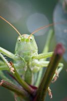 Little Creatures 096 by Frank-Beer