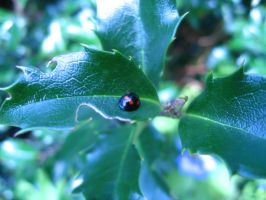 a little ladybug by muisie
