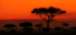 My Africa 21 by catman-suha