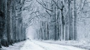 Winter road by Veluwewood