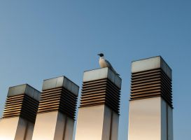 Seagull 1 by Inilein