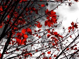 red autumn by Janine-Autumn