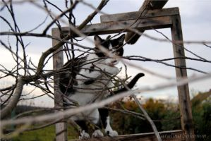 First cats for fences by VanwaLome
