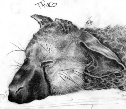 sleeping trico ''portrait'' by MaylaDR93