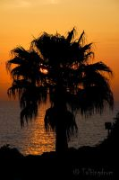 Palm by Talkingdrum