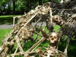 Weird Skeleton Installation 2 by stock-werk
