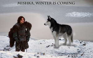 Mishka, winter is coming by Ez0rus
