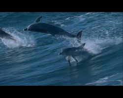 dolphins by zenon113