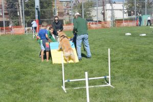 2014 Dog Festival, Try It Dog Obsticles 4 by Miss-Tbones