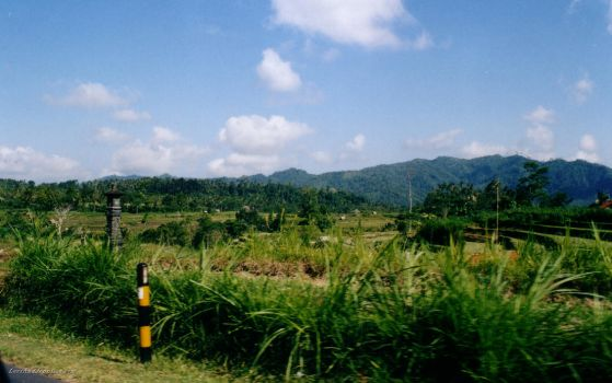 Rice Fields Bali Highlands by leviasay