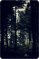 The Dark Forest by Sly-Stark