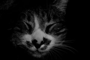 smiley cat by frimmi