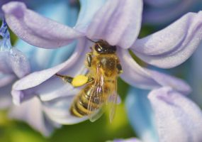 busy bees 2 5 by melrissbrook