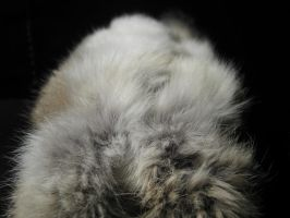 Rabbit Fur 31 by TRANS4MATICA