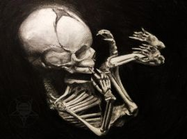foetal skeleton 2 by AndreySkull