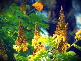 Yellow cone-shaped flowers by arieltelo