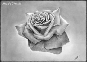 THE Rose...! by prdey9