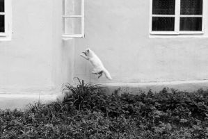 flying cat by lapoonder
