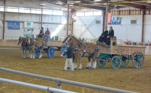 Topsfield Fair, Horse Handler Competition 15 by Miss-Tbones