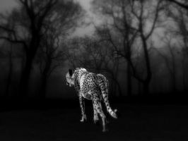 In the black night . . . by Lena-Panthera