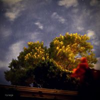 Nocturne d'automne. by hyneige