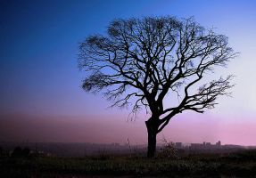 Oh This Old Tree by David-A-Wagner